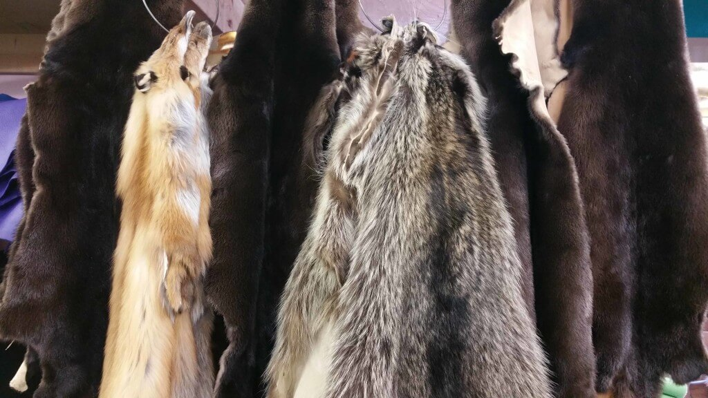 Hair-on Hides & Furs (Farm Raised / Wild Game)